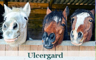 Ulcergard for equine stomach health