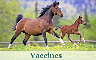 Wide selection of the highest quality vaccines