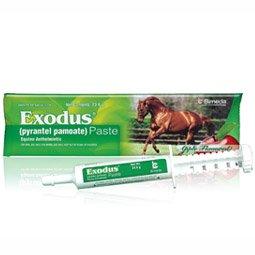 Generic Strongid Paste 23.6gm - 1 Horse Dose