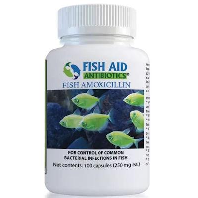 Fish Aid Amoxicillin - 250 mg/100 capsules - In Stock