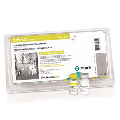 Nobivac Canine Intra-Trac Oral Bb - Oral Kennel Cough Vaccine, Compare to Bronchi-Shield Oral and Save Money